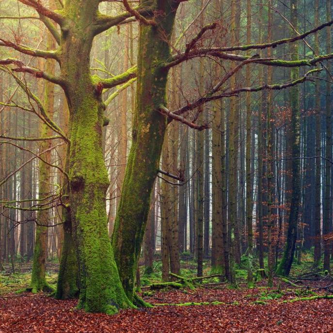 tree-3149274_1920